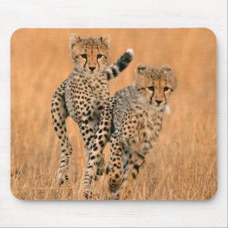 Ungt spring för Cheetahs (acinonyxen Jubatus) Musmatta