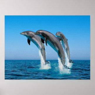 Upp övre övre delfiner poster
