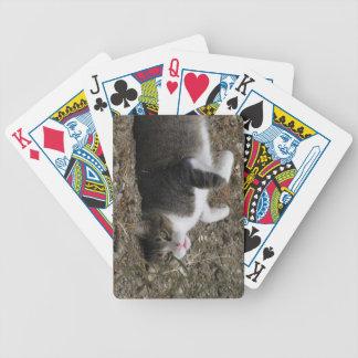 Uppochnervänd kattungecykel som leker kort spelkort