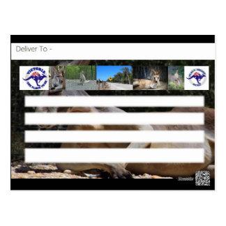 Upptäckt av den Australien känguruvykortet Vykort