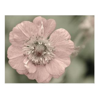 Urblekt blomma vykort