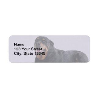 Urblektt Rottweiler lägga besegrar på grå färg Returadress Etikett