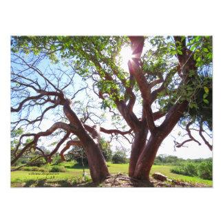 Ursnyggt tryck för sol för GumboLimboträd