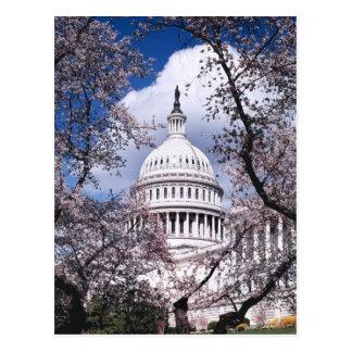 Us-huvudstad med körsbärsröda blommar, Washington Vykort