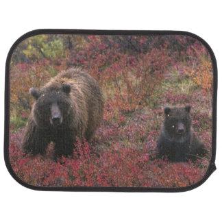 USA Alaska, Denali nationalpark. Grizzlybjörn Bilmatta