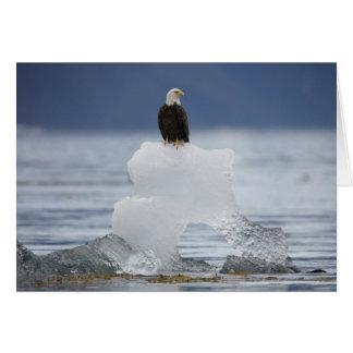 USA Alaska, Holkham fjärd, örn Hälsningskort