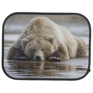 USA Alaska, Katmai nationalpark, brun björn 4 Bilmatta