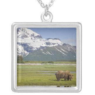 USA Alaska, Katmai nationalpark, brun björn Silverpläterat Halsband