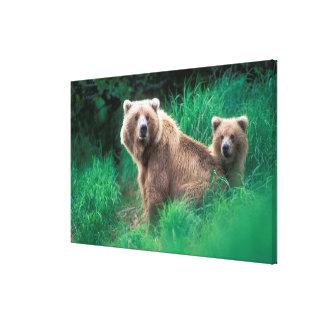 USA Alaska, Katmai nationalpark, Grizzly 3 Canvastryck