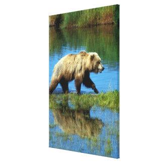 USA Alaska, Katmai nationalpark, Grizzly 4 Canvastryck