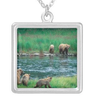 USA Alaska, Katmai nationalpark, Grizzly 4 Silverpläterat Halsband