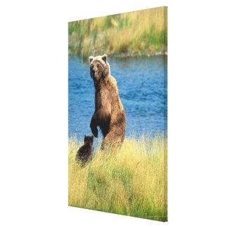 USA Alaska, Katmai nationalpark, Grizzly 5 Canvastryck