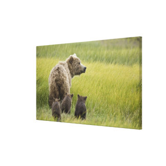 USA Alaska, sjöClark nationalpark. Grizzly Canvastryck