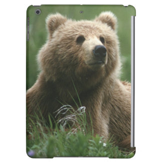 USA Alaska, under-vuxen för Kodiak två bruna björn