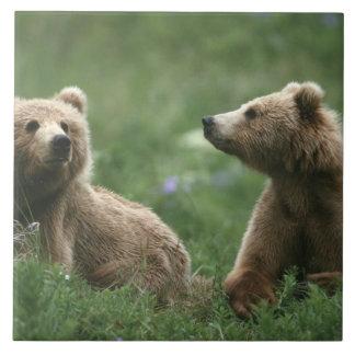 USA Alaska, under-vuxen för Kodiak två bruna björn Kakelplatta