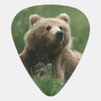USA Alaska, under-vuxen för Kodiak två bruna Plektrum