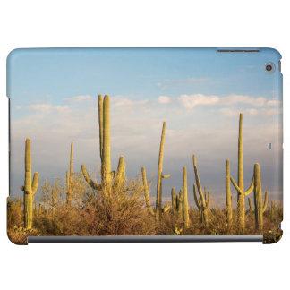 USA Arizona, Saguaronationalpark, Saguaro
