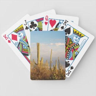 USA Arizona, Saguaronationalpark, Saguaro Spelkort