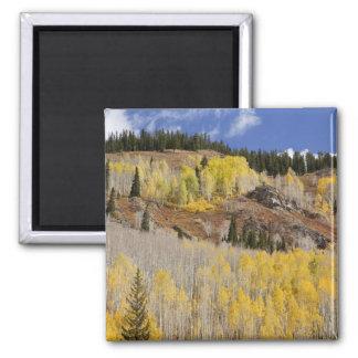 USA Colorado, Gunnison nationalskog, along Magnet