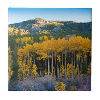 USA Colorado. Ljusa gula aspen i Rockies Kakelplatta