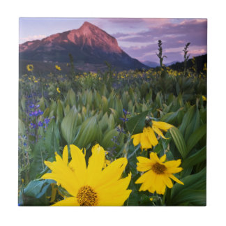 USA Colorado, Mt. krönade butten Kakelplatta