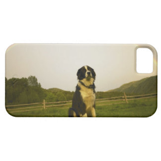 USA Colorado, nytt slott iPhone 5 Case-Mate Fodral