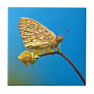 USA Colorado. Skepparefjäril på blommastem Kakelplatta