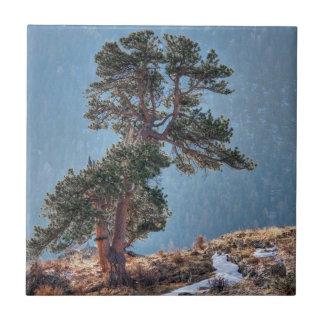 USA Colorado, träd i Estes parkerar Kakelplatta