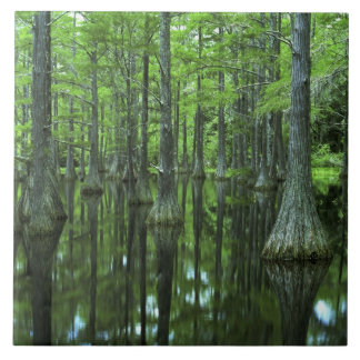 USA Florida, Apalachicola nationalskog som är skal Kakelplatta