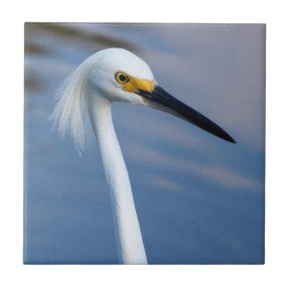 USA Florida, Evergladesnationalpark Kakelplatta