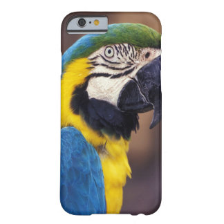 USA Florida. Macaw Barely There iPhone 6 Skal