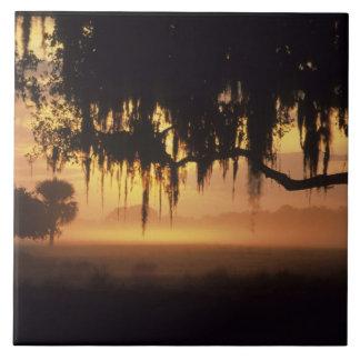 USA Florida, sjö Kissimmee. Soluppgångsilhouette Kakelplatta