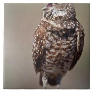 USA Florida som gräver owl.en Kakelplatta