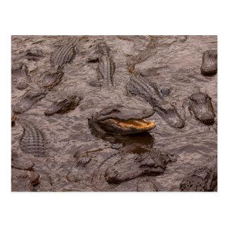 USA Florida, St Augustine, krokodiler Vykort