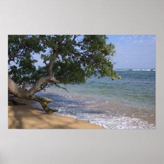 USA Hawaii, Kauai, sätter på land sceniskt. RF) Poster