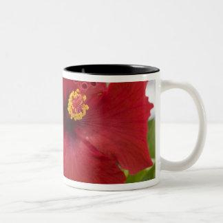 USA Hawaii, Oahu. Hibiskusen är Två-Tonad Mugg