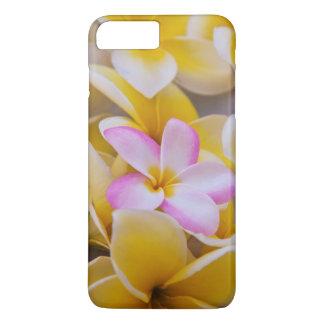 USA Hawaii, Oahu, Plumeria blommar i blom 1