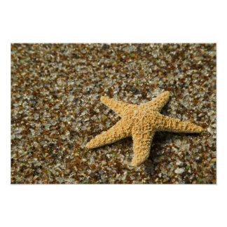 USA HI, Kauai, Glass strand med stjärnafisken Poster