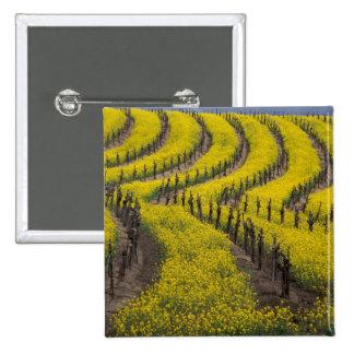 USA Kalifornien, Napa Valley, Los Carneros Ava. Standard Kanpp Fyrkantig 5.1 Cm