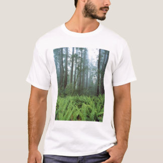 USA Kalifornien, redwoodträd NP. Ferns och Tee Shirt