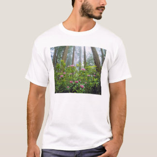 USA Kalifornien, redwoodträd NP. Rhododendron Tee