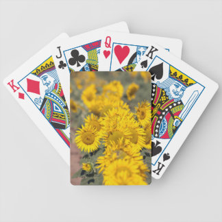 USA Kansas. Solrosor (helianthus annuus) Spelkort