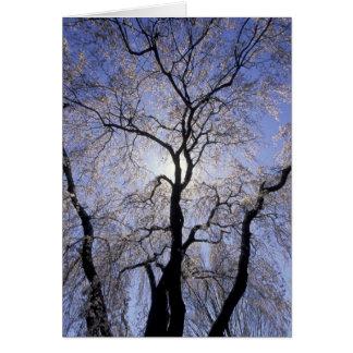 USA Kentucky, Lexington. Bakbelyst träd och Hälsningskort