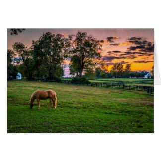 USA Lexington, Kentucky. Lone häst på solnedgång 2 Hälsningskort