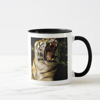 USA Michigan, Detroit. Detroit Zoo, tiger 2 Mugg