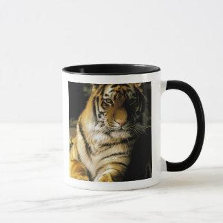 USA Michigan, Detroit. Detroit Zoo, tiger 3 Mugg
