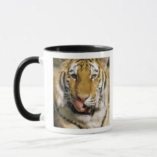 USA Michigan, Detroit. Detroit Zoo, tiger Mugg