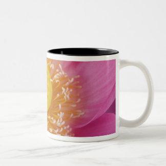 USA; North Carolina; Lotusblomma som blommar i Två-Tonad Mugg