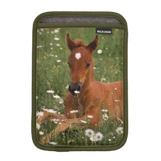 USA Oregon, arabisk Pony. iPad Mini Sleeve