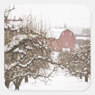 USA Oregon, Hood River. Snö dolda Apple Fyrkantigt Klistermärke
